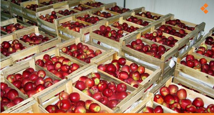 سورية ستصدر محصول التفاح إلى مصر خلال هذا الموسم - أثر برس